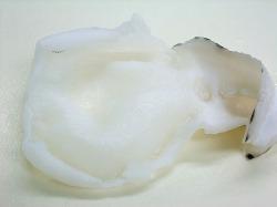虎河豚の白皮(腹側)の小棘を取り、湯引いたものです