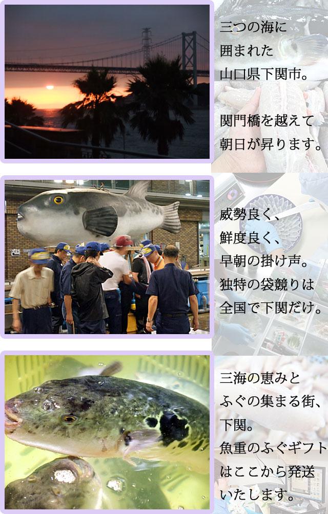 山口県下関市 ふぐの魚重